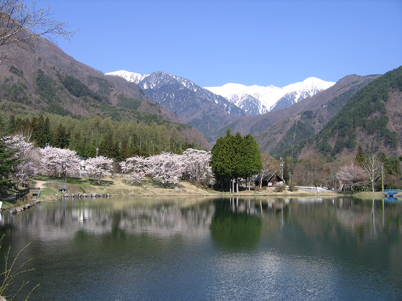 The end of April: Cherry blossoms at Komaga Pond and snow in Senjojiki